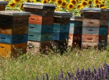 Pour Noël faites un cadeau aux abeilles