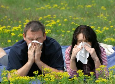 Pourquoi tant d'allergies ?