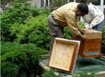 Les abeilles de Clichy la Garenne