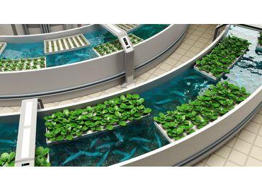 L'aquaponie, cultiver ses plantes grâce aux poissons