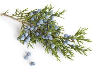 Biolika : l'exigence de la plante médicinale