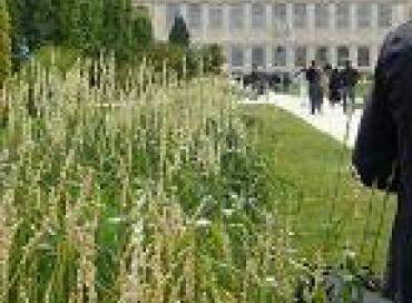 Des blés paysans au Jardin des Plantes