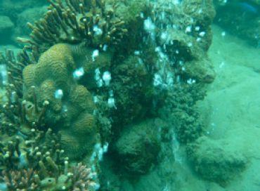 Les coraux en péril