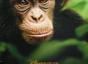 Chimpanzés le dernier Disney