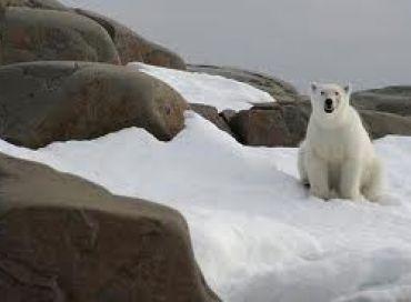 Bilan mitigé pour la protection des espèces menacées