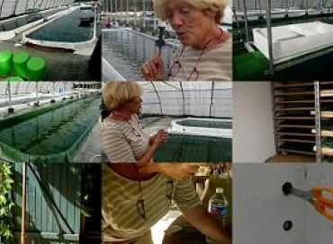 Des pionniers de la spiruline dans le Var