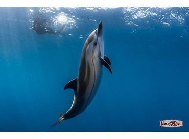 Rencontre avec les dauphins en Méditerranée