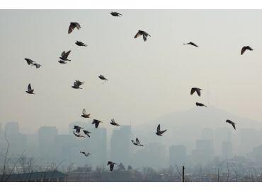 Le déclin des oiseaux : un problème grandissant