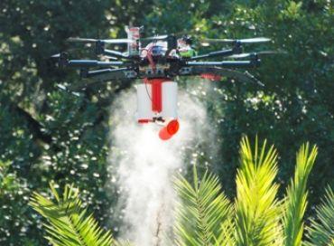 Un drone à l'attaque du charançon rouge