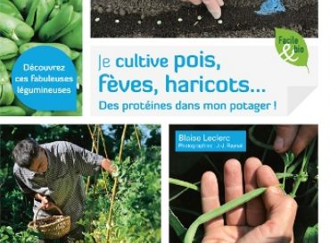 je cultive pois fèves et haricots, des protéines dans mon jardin