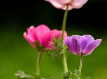 Les fleurs médicinales une petite entreprise