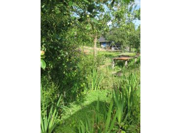 Découvrez la forêt jardin avec la permaculture