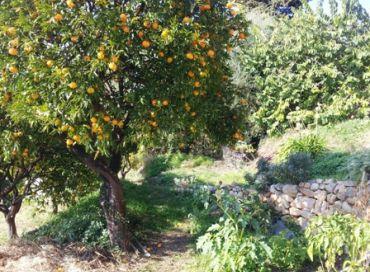 Les jardins des antipodes