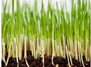 Graines germées: info ou intox?