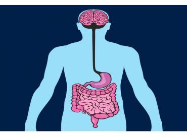 Microbiote et dépression, OGM dans l'alimentation et disparition des vrais jumeaux