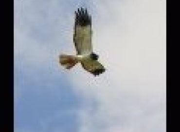 Pourquoi les oiseaux migrent ils?