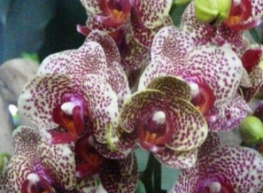 Les orchidées du jardin des plantes