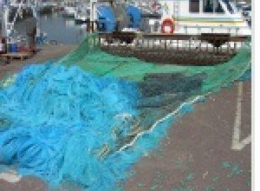 Les quotas de pêche seraient-ils une aberration ?