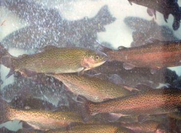 La pisciculture aussi passe au BIO