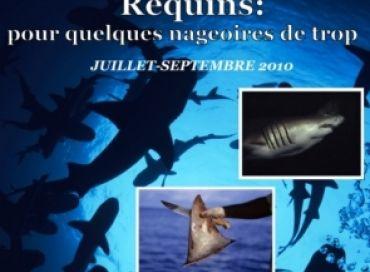 Requins : pour quelques nageoires de trop !