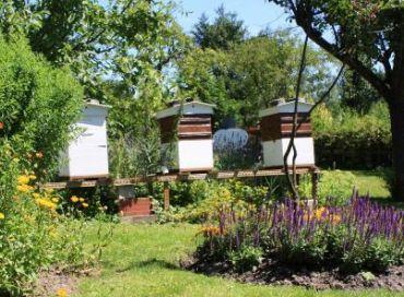 Débuter dans l'apiculture