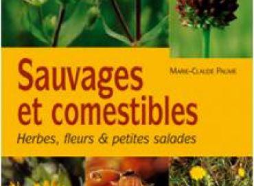 Dégustez des plantes sauvages !