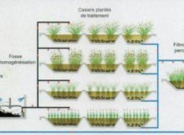 Phytorestore lutte contre les pollutions