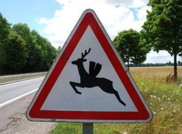 Prévenir les collisions avec les animaux sauvages