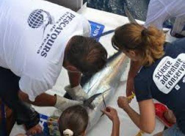 Le thon rouge : histoire d'une surpêche et d'une reconstitution