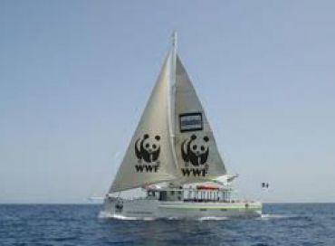 WWF Opération Cap Cétacés
