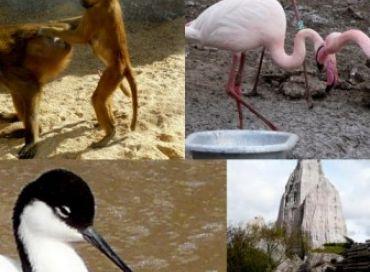Réouverture du parc zoologique de Paris